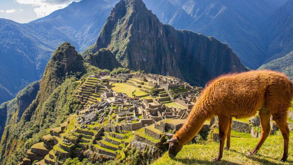 Machu Picchu ja laama